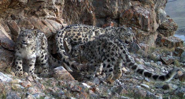 leopard-trust-1-620pxW