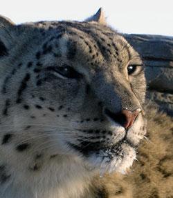 leopard-trust-3