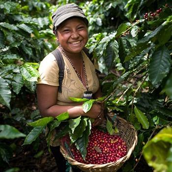 Woman picking coffee cherries in Matagalpa, Nicaragua.