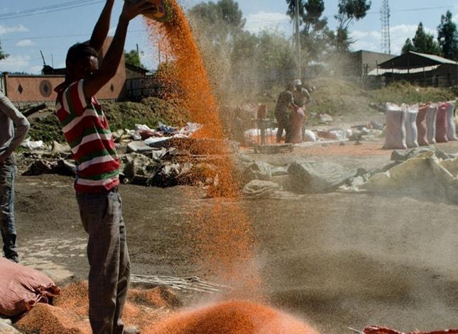 Man pouring grain