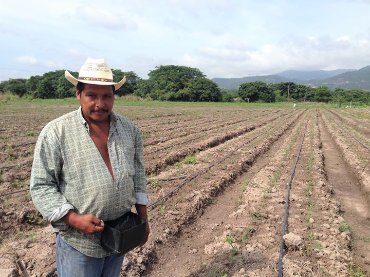 Augusto Cardona, an Agros partner in Nuevo Amanecer, Honduras, stands in front of his empty field in 2015. He later planted it with corn. Credit: Cesar Velasquez, Agros International