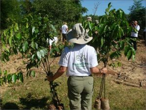 PeaceTrees Tree Planting