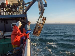 Catching Oregon Dungeness crab