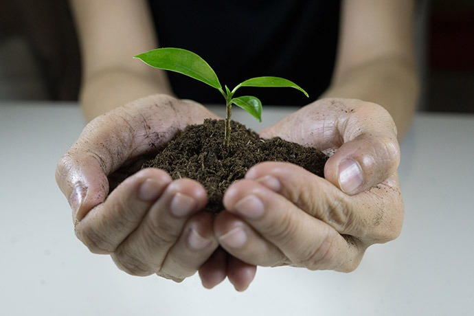 Hand holding plant in dirt.